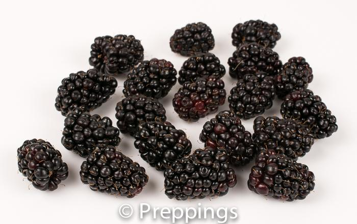 Ingredient Of The Day: Marionberry