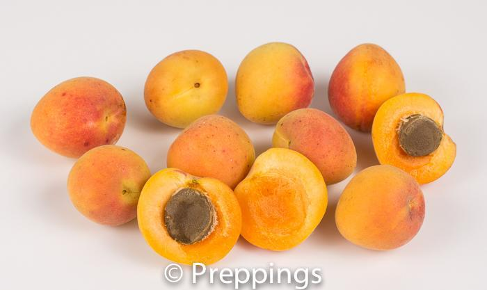 Royal Blenheim Apricot