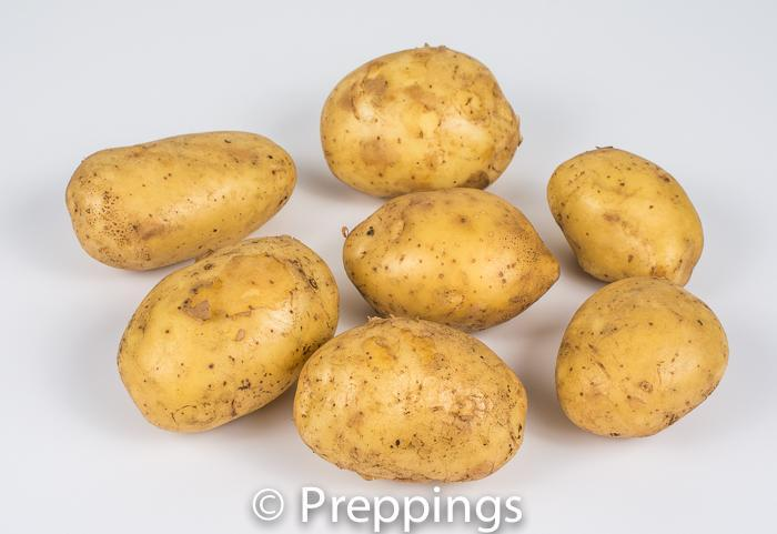 Bintje Potato