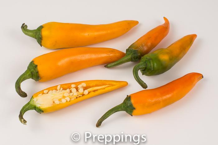 Bulgarian Carrot Chile Pepper