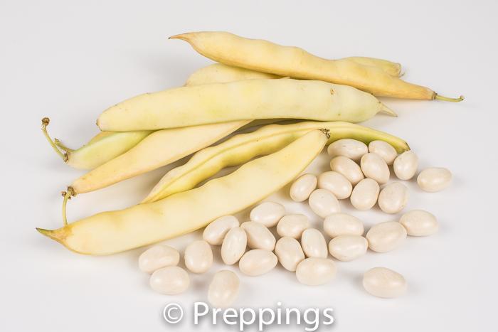 Fresh Marrow Bean