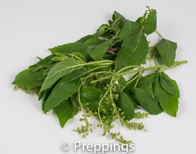 Ingredient Of The Day: Holy Basil