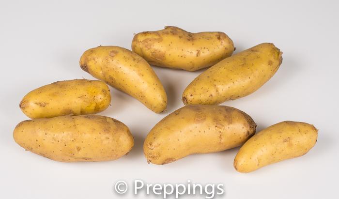 La Ratte Potato