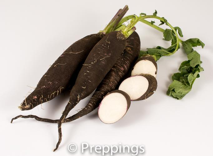 Ingredient Of The Day: Long Black Radish