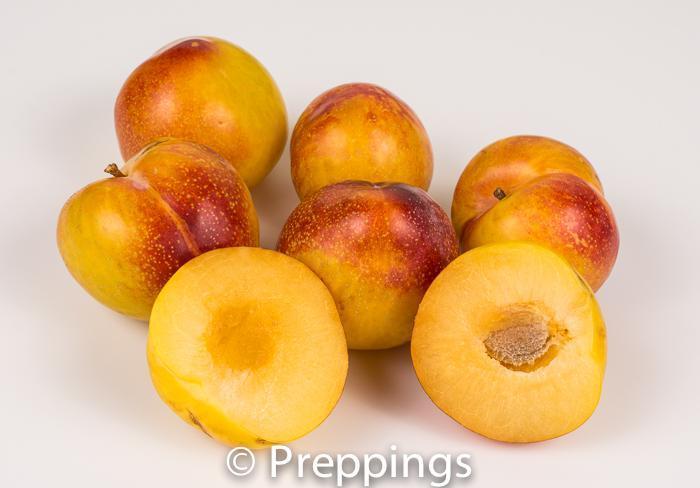 Mango Tango Pluot