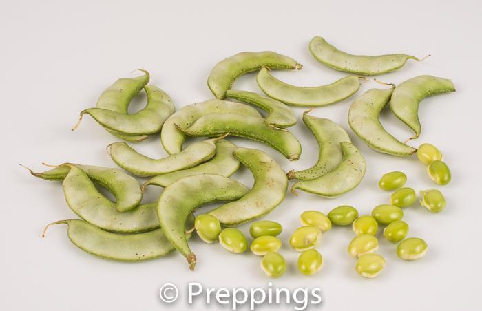 Papdi Bean
