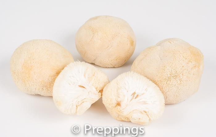 Ingredient Of The Day: Pom Pom Mushroom