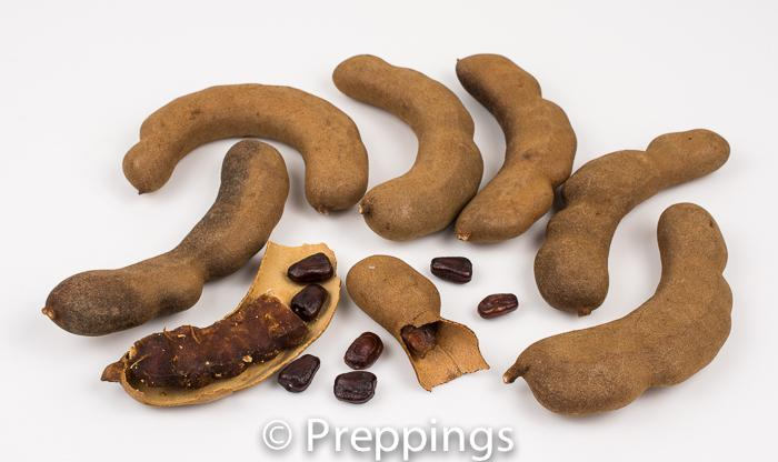 Ingredient Of The Day: Tamarind