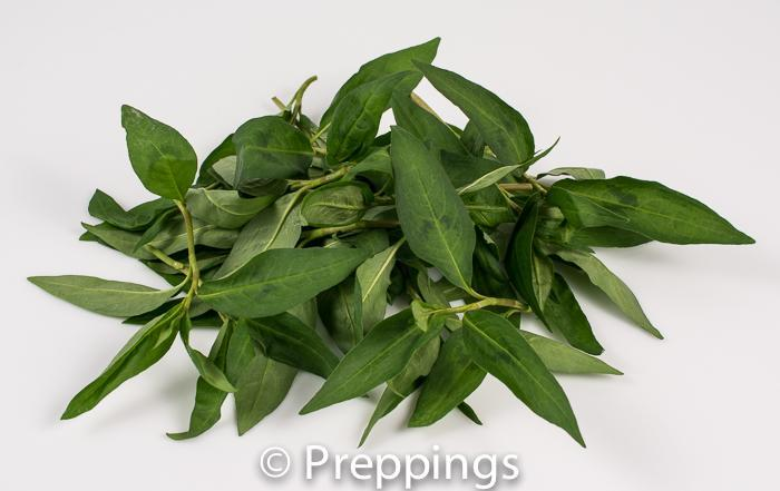 Ingredient Of The Day: Vietnamese Coriander