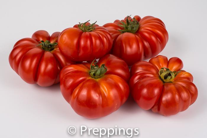 Costoluta Genovese Tomato