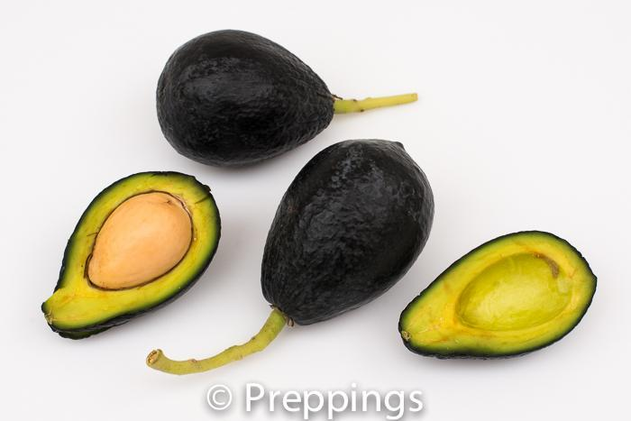 Criollo Avocado