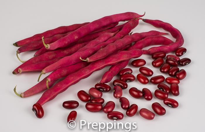 Fresh Oaxaca Red Shelling Bean