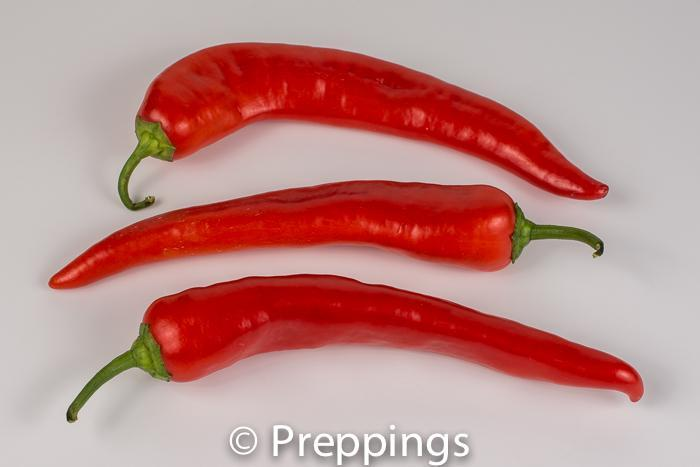 Hungarian Chile Pepper