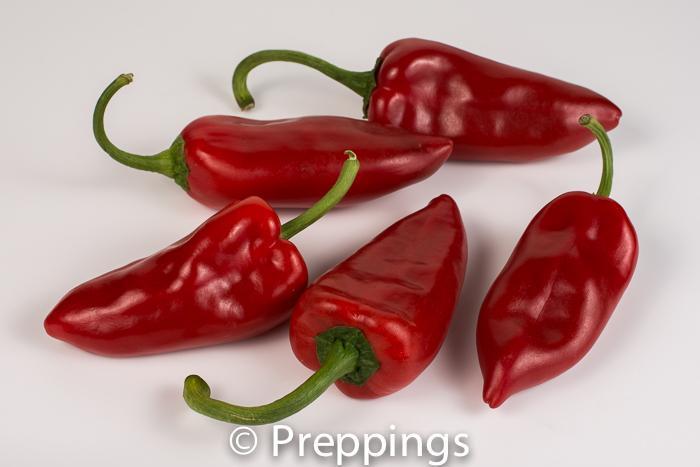 Piquillo Chile Pepper