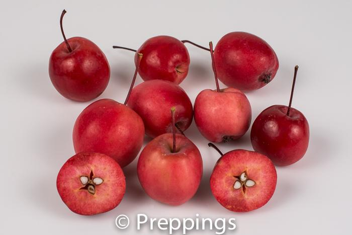 Siberian Red Vein Crab Apple