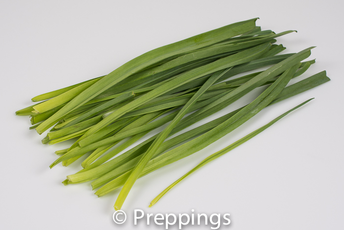 Ingredient Of The Day: Baby Leek