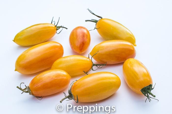 Blush Tiger Tomato