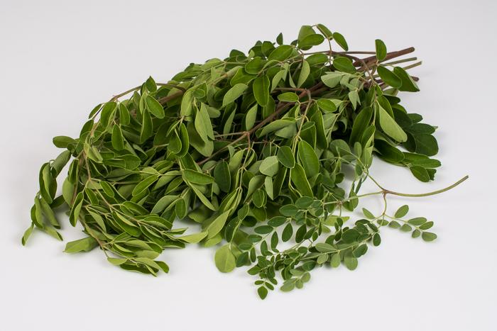 Moringa Greens