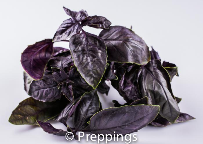 Ingredient Of The Day: Opal Basil