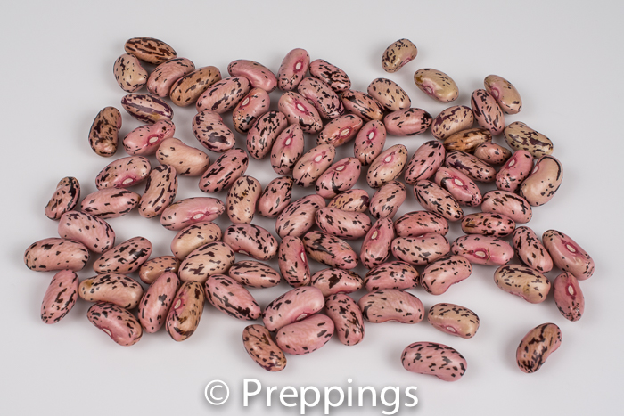 Dried Rattlesnake Bean