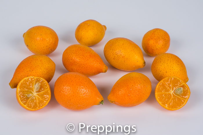 Ingredient Of The Day: Centennial Kumquat