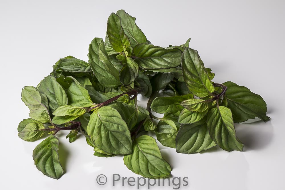 Ingredient Of The Day: Bergamot Mint
