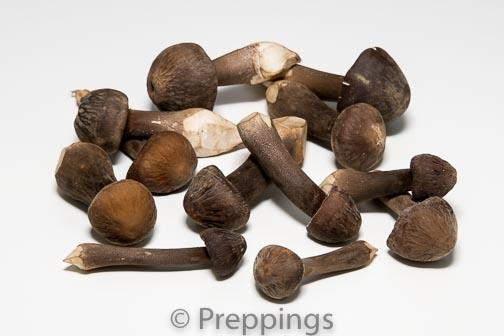Ingredient Of The Day: Pioppini Mushroom