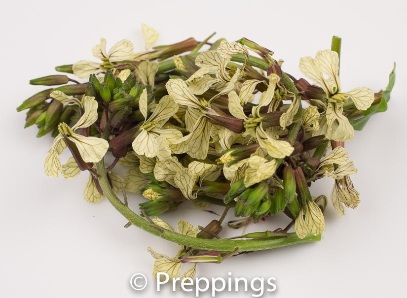 Ingredient Of The Day: Arugula Blossom