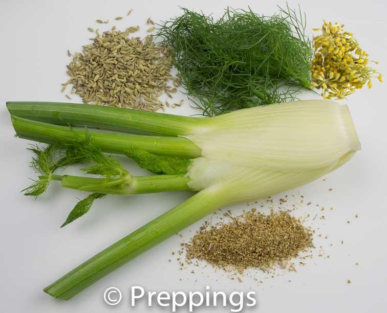 Tip To Tail: Fennel