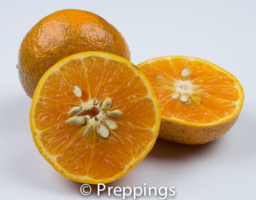 Ingredient Of The Day: Honey Tangerine