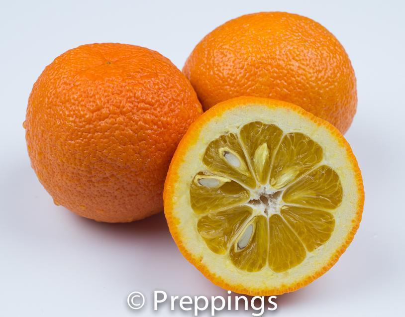 Ingredient Of The Day: Seville Orange