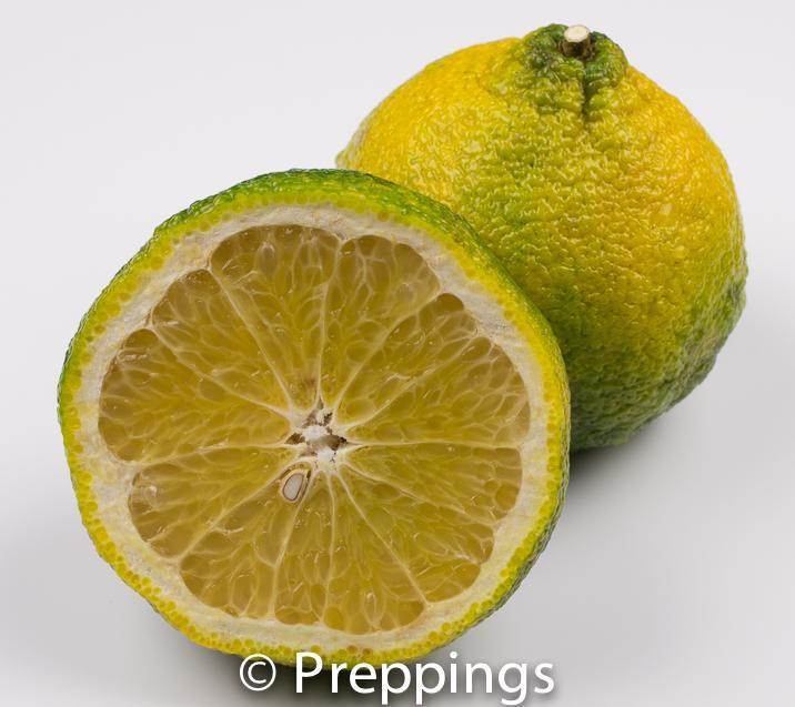 Ingredient Of The Day: Ugli Fruit