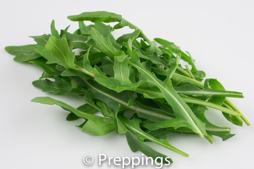 Ingredient Of The Day: Wild Arugula