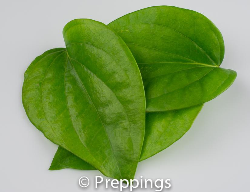 Ingredient Of The Day: Betel Leaf