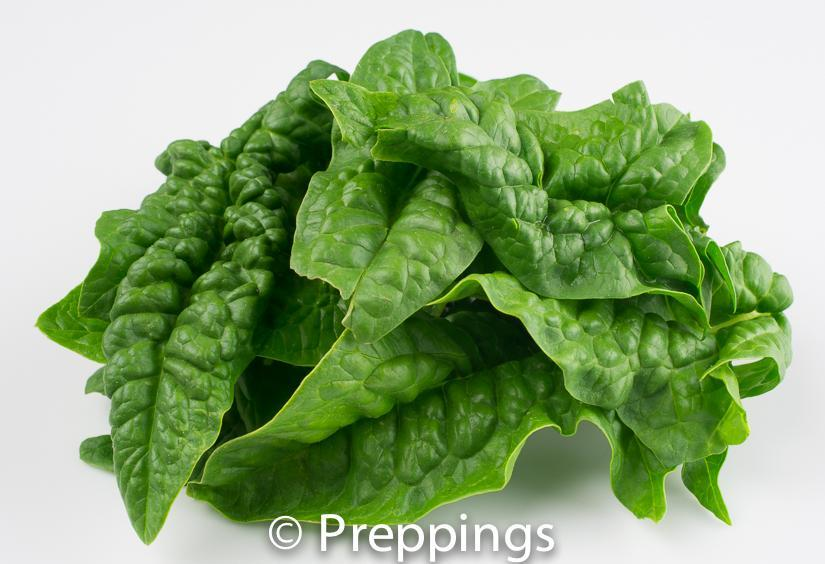 Ingredient Of The Day: Bloomsdale Spinach
