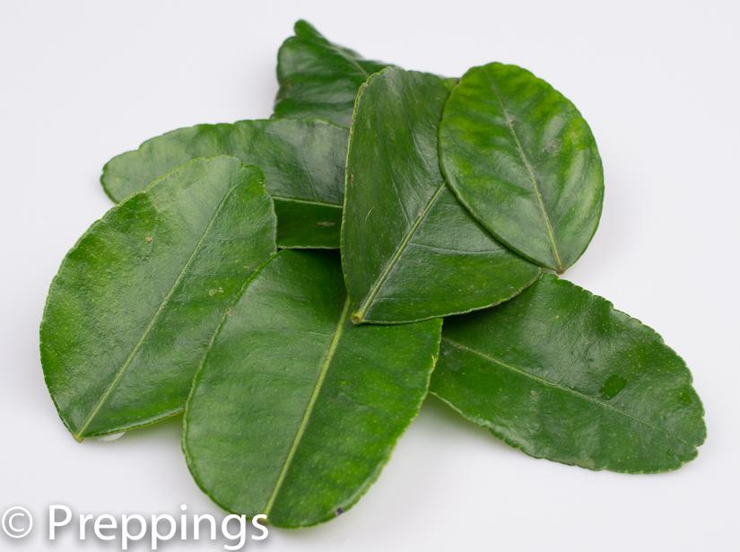 Ingredient Of The Day: Kaffir Lime Leaf