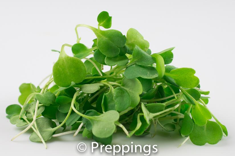 Ingredient Of The Day: Micro Arugula