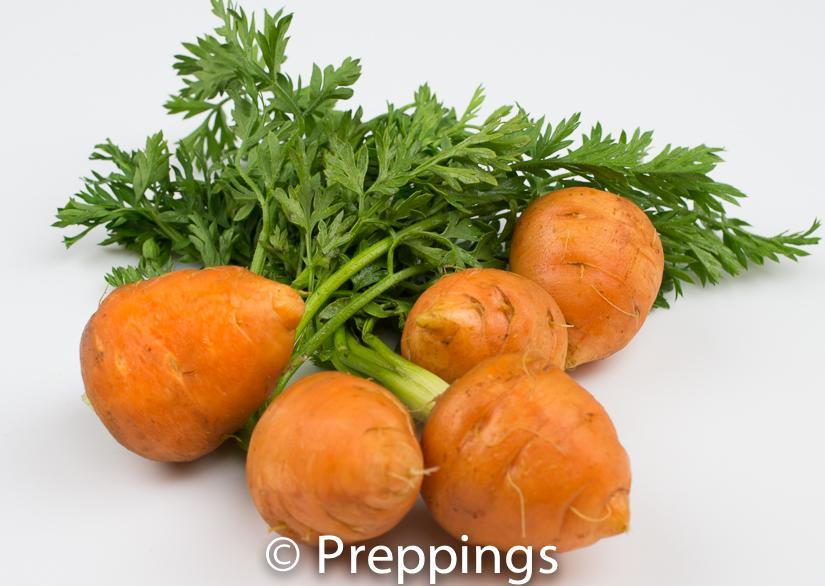 Ingredient Of The Day: Paris Market Carrot