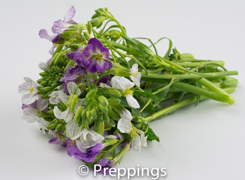 Ingredient Of The Day: Radish Blossom