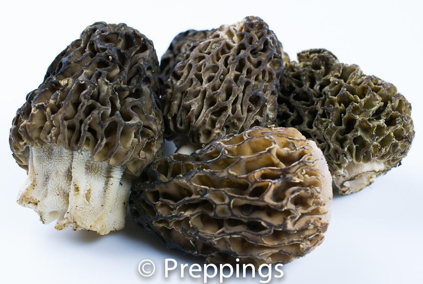 Ingredient Of The Day: Morel Mushroom