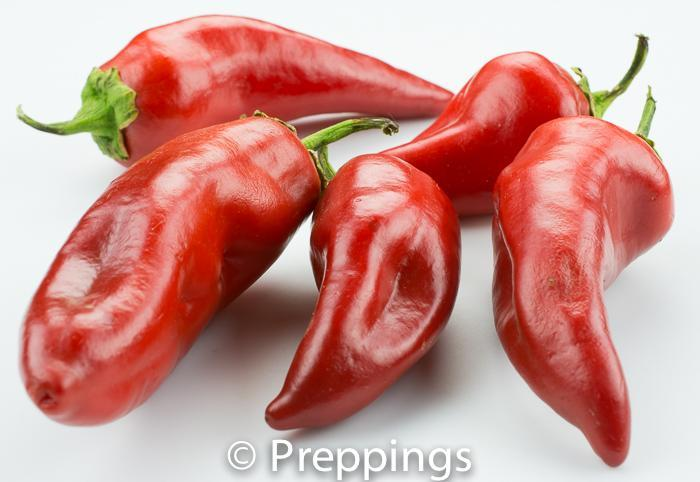 Ingredient Of The Day: Corno Di Toro Chile Pepper