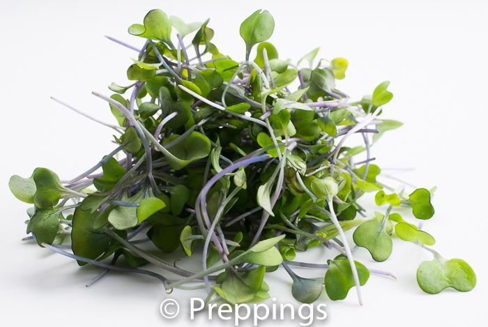 Ingredient Of The Day: Kohlrabi Sprouts