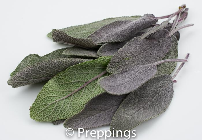 Ingredient Of The Day: Purple Sage