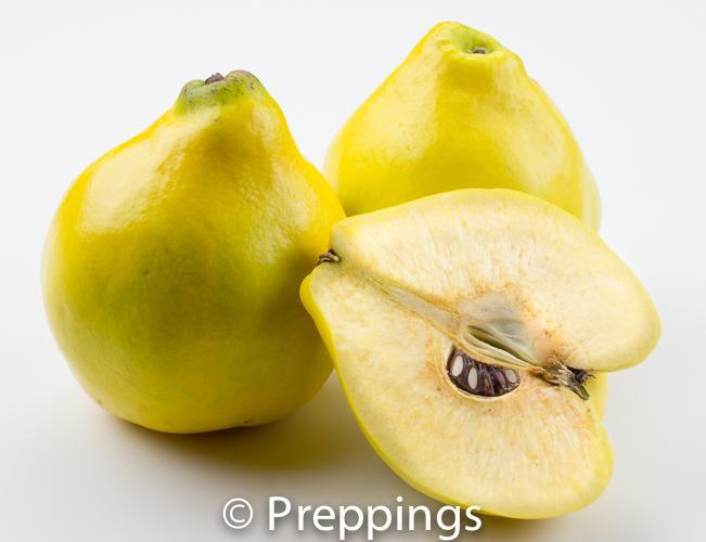 Ingredient Of The Day: Quince