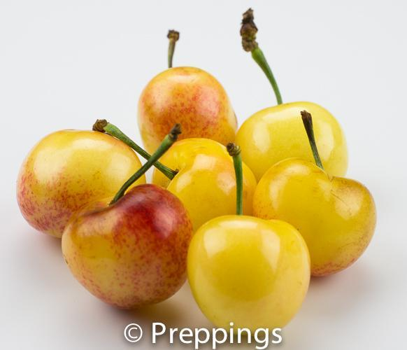 Ingredient Of The Day: Rainier Cherry