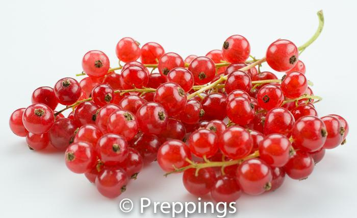 Ingredient Of The Day: Red Currant