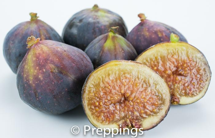 Ingredient Of The Day: Melissa Fig
