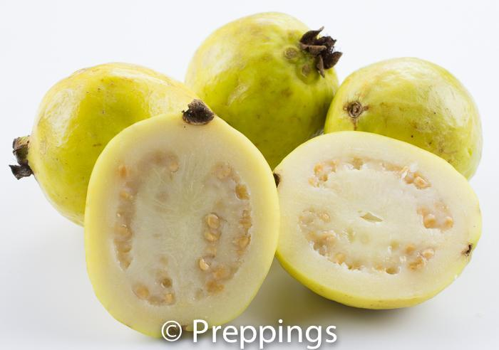 Ingredient Of The Day: Guava