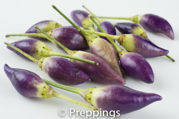 Ingredient Of The Day: Numex Twilight Chile Pepper