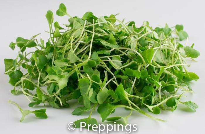 Ingredient Of The Day: Broccoli Sprouts